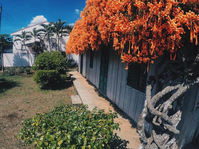 1 lần đến thăm căn nhà phủ đầy hoa xác pháo ở Bảo Lộc